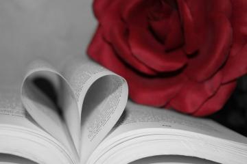 Livre romantique accompagné de sa rose rouge
